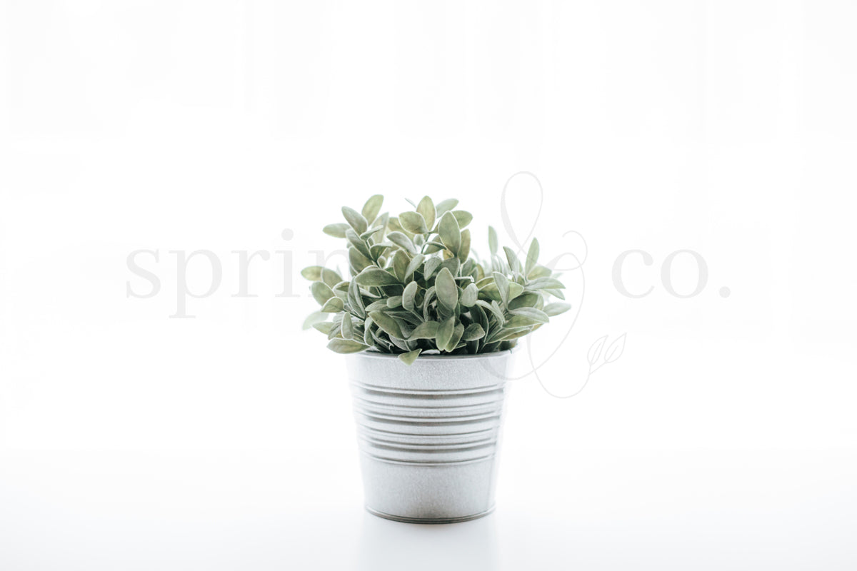 Potted Plant 2