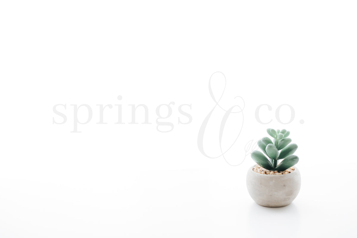 Potted Plant 7