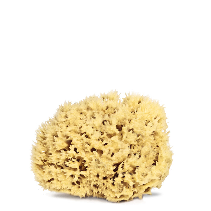 Organic Mediterranean Sea Sponges for cleansing your body and face or for bathing kids. 10 x 7 x 10cm. Soft and spongy.