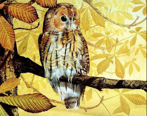 Owl paint by numbers
