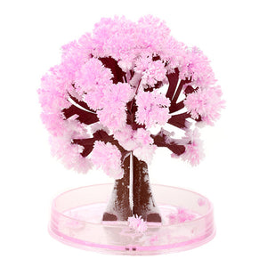 Magic Sakura Trees (about 9 cm)