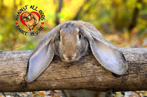 Against All Odds Rabbit Rescue Calendar 2021