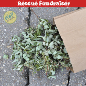 Hop Online Ashton's Willow Leafy Twigs 50 g (Rescue Fundraiser)