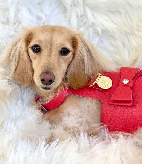 Melting Hearts-Italian Leather Dog Harness