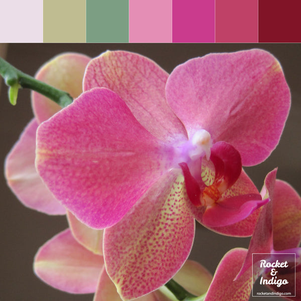 Orchid colour palette