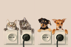 AC-DogCat - Cute Cat / Dog 3D Wall Stickers