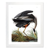 Framed Bird Print - Audubon Great Blue Heron