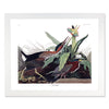 Framed Bird Print - Audubon Green Heron | Bank and Surf Custom Maps