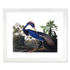 Framed Bird Print - Audubon Louisana Blue Heron
