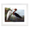 Framed Bird Print - Audubon Purple Heron