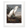 Framed Bird Print - Snowy Heron or White Egret