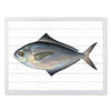Framed Fish Print - Butter Fish
