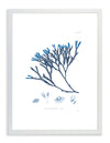 Framed Blue Sea Weed III | Bank and Surf Custom Maps |Framed Sea Weed