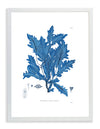 Framed Blue Sea Weed V | Bank and Surf Custom Maps | Framed Sea Weed