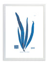 Framed Blue Sea Weed VI | Bank and Surf Custom Maps | Framed Sea Weed