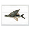 Framed Fish Print - Flying Fish