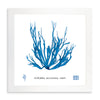 Framed Blue Sea Weed I | Bank and Surf Custom Maps | Framed Sea Weed