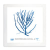 Framed Blue Sea Weed II | Bank and Surf Custom Maps |Framed Sea Weed