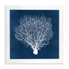 Framed Coral Print - Navy & White I