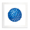 Framed Coral Print - Blue Series III