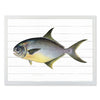 Framed Fish Print - Pompano