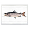 Framed Fish Print - Salmon