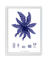 Framed Navy Blue Sea Weed I | Bank and Surf Custom Maps | Framed Sea Weed