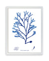 Framed Navy Blue Sea Weed III | Bank and Surf Custom Maps | Framed Sea Weed
