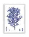 Framed Navy Blue Sea Weed IV | Bank and Surf Custom Maps | Framed Sea Weed