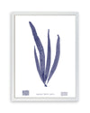 Framed Navy Blue Sea Weed V | Bank and Surf Custom Maps | Framed Sea Weed