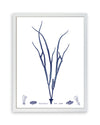 Framed Navy Blue Sea Weed VI | Bank and Surf Custom Maps | Framed Sea Weed