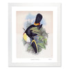 Framed Toucan Print - Single Toucan