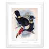 Framed Toucan Print - Pair of Toucans by John Gould