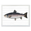 Framed Fish Print - Trout