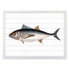 Framed Fish Print - Tuna