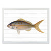 Framed Fish Print - Yellow Fish