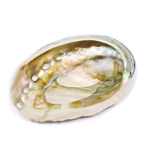 Abalone Shell (5-7cm)