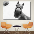 HD Prints Pictures Wall Art White Horses Closeup Snout Nose Gray background Paintings For Living Home Decor Animal Poster
