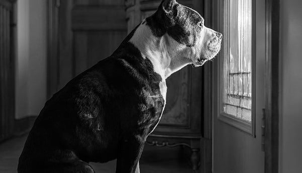 Dog Separation Anxiety: How It Happens and How To Recognize It