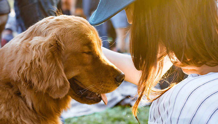 The Real Puppy Love: How Dogs Love and Perceive Love