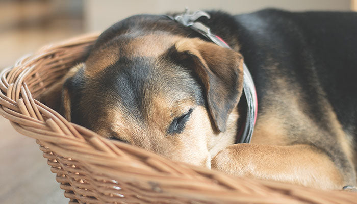 Dog Separation Anxiety: How To Treat and Prevent It