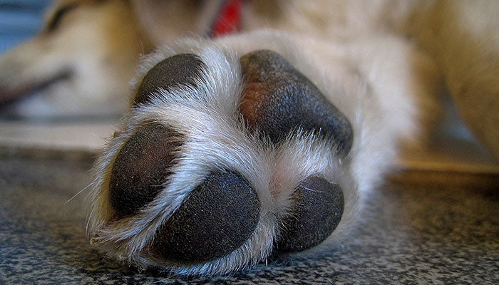 Healthy Paws, Happy Dogs: How to Keep Your Pup's Feet Healthy