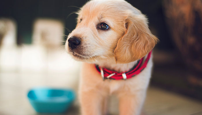 Keep Your Pup Happy and Healthy: Tips to Help Your Pup Live Longer