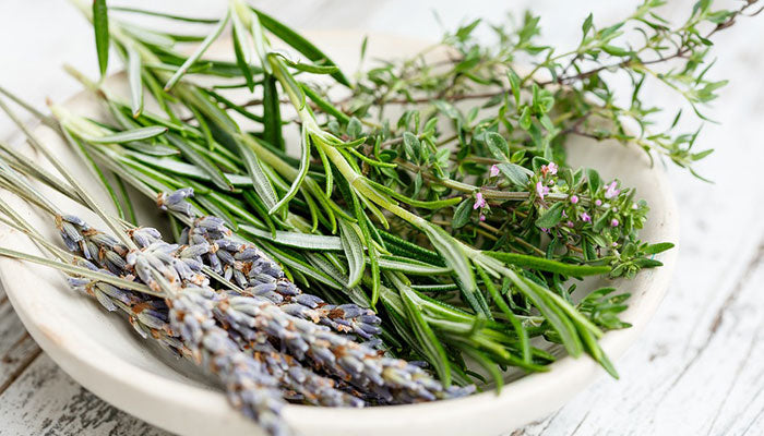 Rosemary: The Natural Bug Repellent