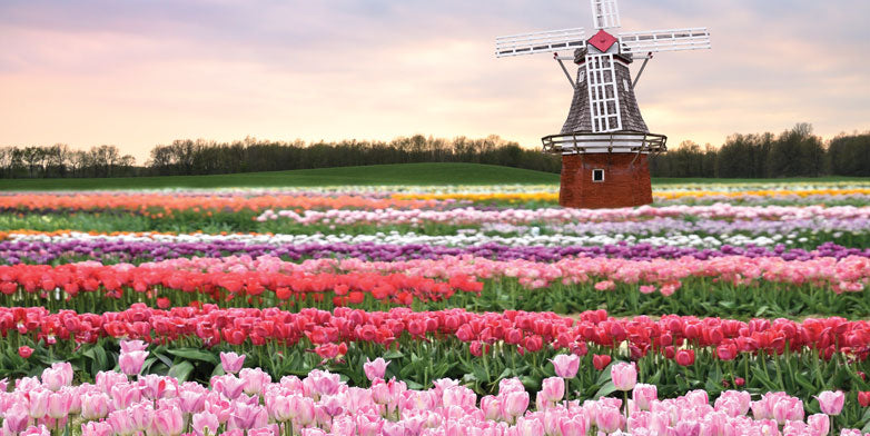 tulips-and-windmills-2014-new