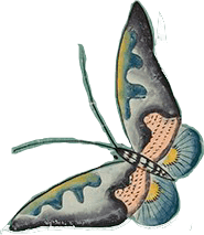 A graphic of a butterfly.
