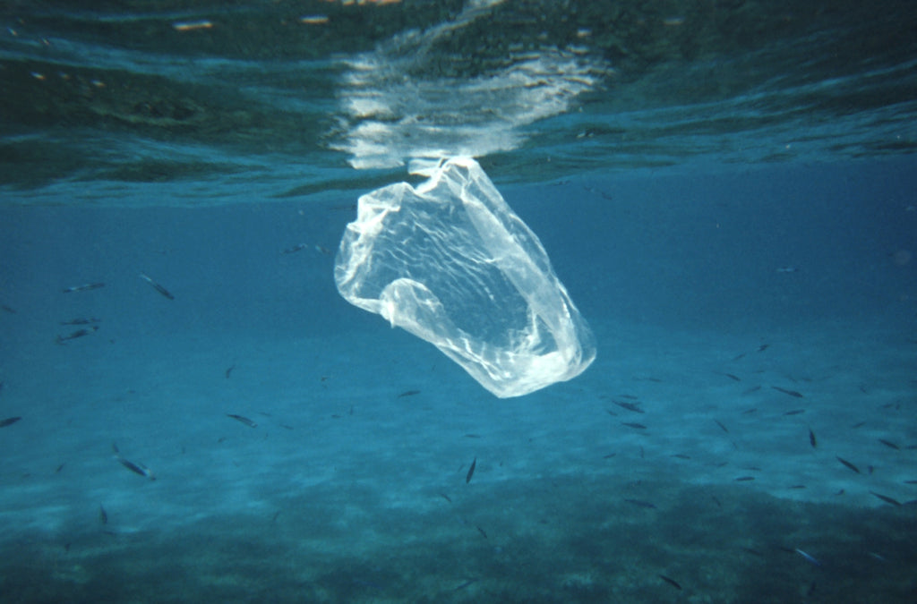 How Does Your Trash End Up in the Ocean?