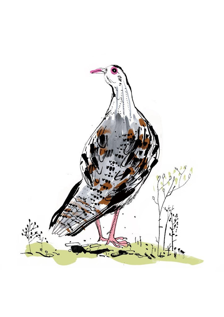 Sam Wilson Red Legged Partridge Print - NOW 20% OFF