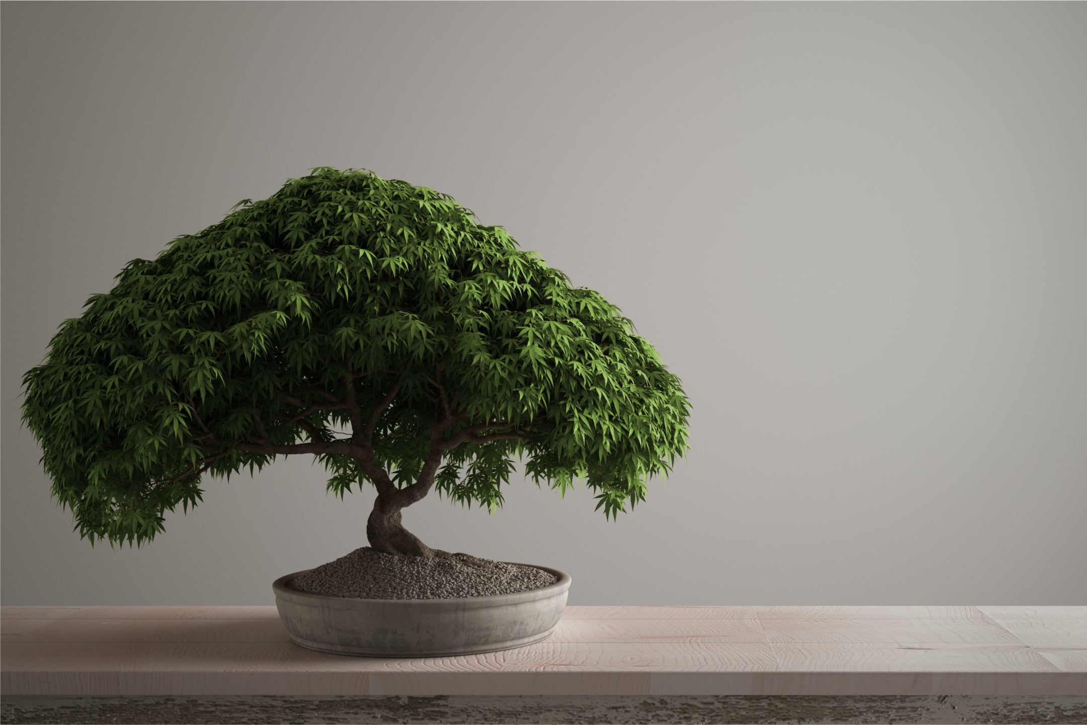 The Bonsai Tree Meaning, History & Benefits - Karma and Luck