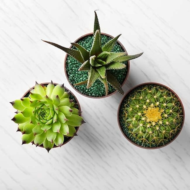 How to Plant Potted Succulents